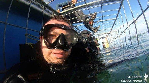 Güney Afrika Köpekbalığı Kafes Dalışı