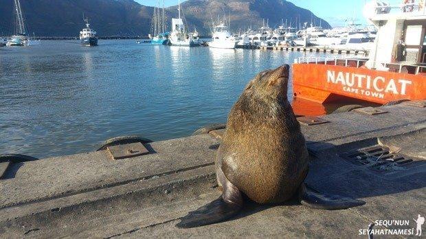 cape-town-seal-island-bilet-ucreti
