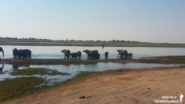 chobe-safari-turu